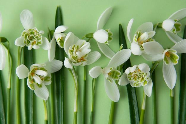 Wiosenne kwiaty, białe przebiśniegi na zielonym tle.