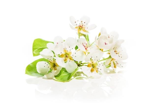 Wiosenne kwiaty drzew owocowych na białym tle.