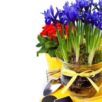 Wiosenne kwiaty i narzędzia ogrodowe