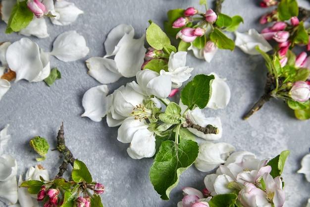 Wiosenne kwiaty, leżące na płasko. gałęzie jabłoni z różowe i białe kwiaty i zielone liście na szarym tle, widok z góry. wiosenny kwiat