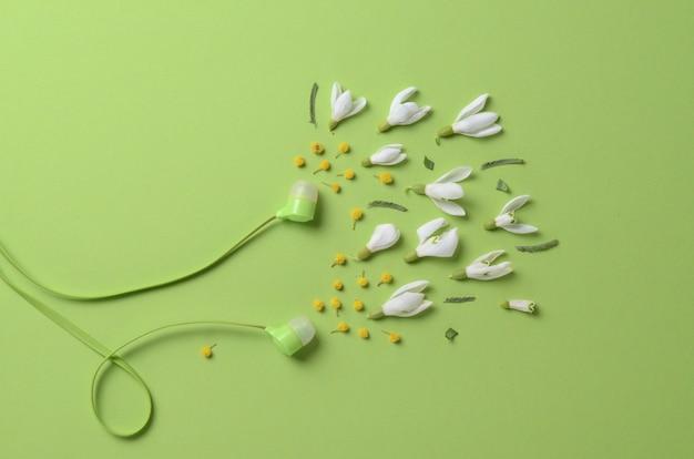 Wiosenne kwiaty, przebiśniegi i mimozy jako dźwięk ze słuchawek na zielonym tle.