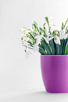 Wiosenne kwiaty przebiśniegi w filiżance.