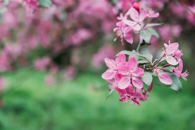 Wiosenne kwiaty transparent wiosna odnowienie natura w wiosennych kwiatach kwitnące nowe życie różowy kwiat sakura