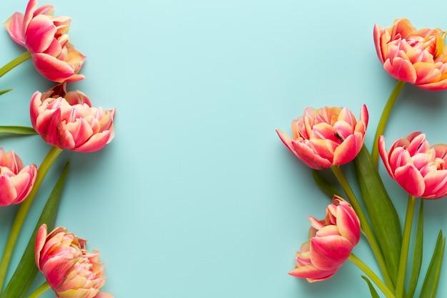 Wiosenne kwiaty tulipany na tle pastelowych kolorów.