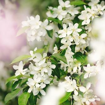 Wiosenne kwiaty w ogrodzie z bliska