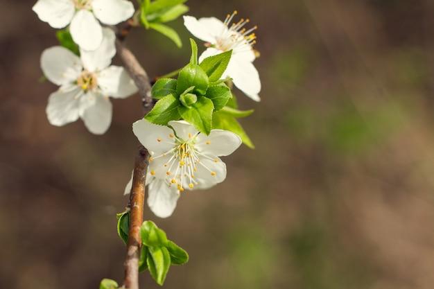 Wiosenne kwiaty w sadzie
