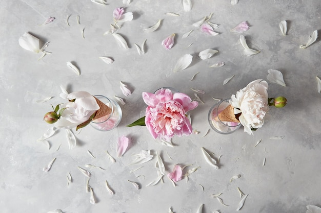 Wiosenne kwiaty wzór z różową, białą piwonią, płatkami na szarym tle kamienia, miejsce. widok z góry. koncepcja gratulacji z okazji walentynek