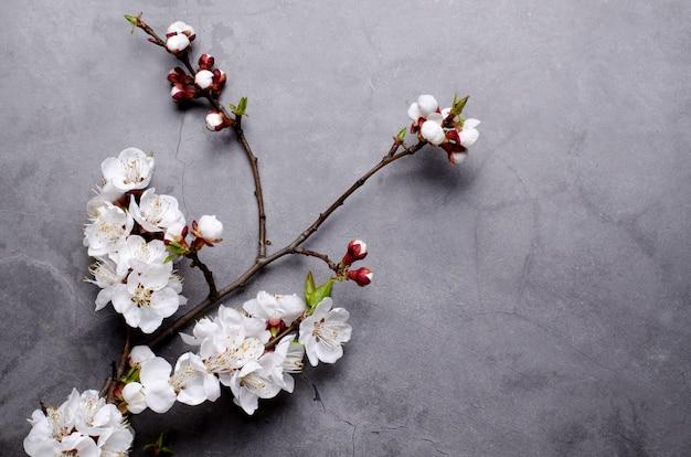 Wiosenne kwiaty z gałęzi kwitnących moreli na szaro