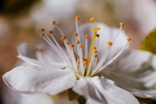 Wiosenne kwiaty z niewyraźne