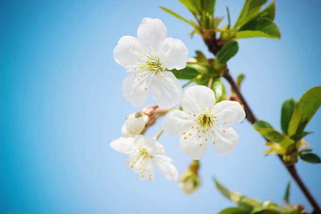 Wiosenne kwitnące drzewa. kwitnący ogród. selektywne focus charakter