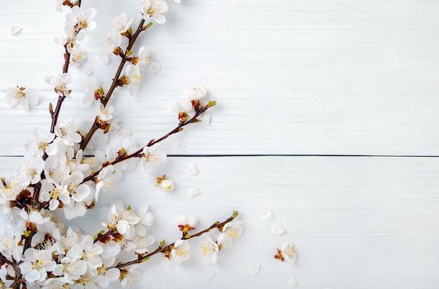 Wiosenne kwitnące gałęzie z dużą ilością kwiatów moreli na białym drewnianym stole. kompozycja z kwiatów drzew owocowych na jasnym tle. widok z góry.