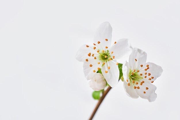 Wiosenne kwitnące gałęzie