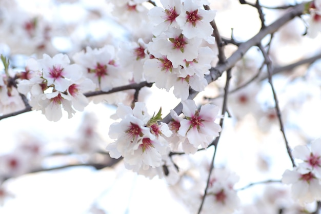 Wiosenne kwitnienie kwiatów na drzewie białe kwiaty os i trzmieli na spacer