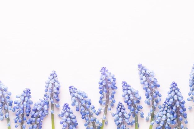 Wiosenne niebieskie kwiaty muscari.