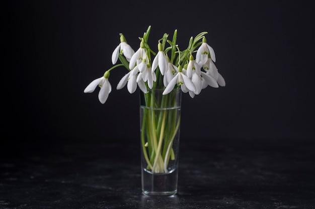 Wiosenne przebiśniegi w szkle z wodą na czarnym tle. piękne pierwsze wiosenne kwiaty, z bliska