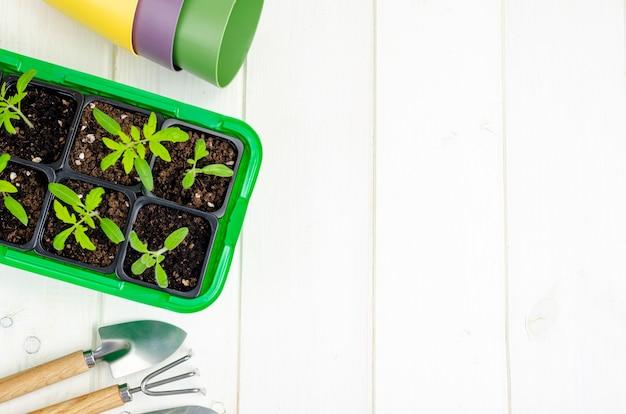 Wiosenne rosnące sadzonki warzyw w koncepcji rolnictwa ekologicznego kontenera