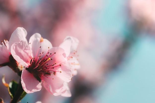 Wiosenne różowe kwiaty tła