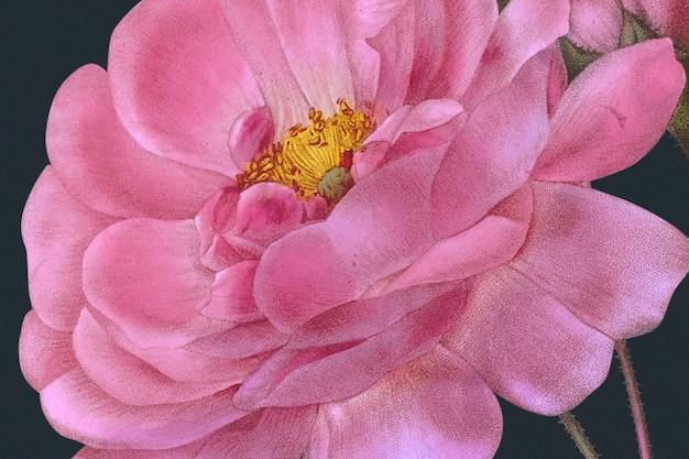Wiosenne tło kwiatowe z ilustracją róży adamaszkowej, zremiksowane z dzieł należących do domeny publicznej