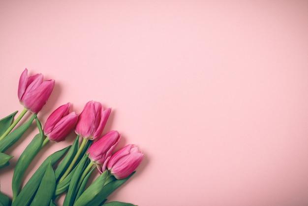 Wiosenne tulipany leżą na pięknym różowym tle.