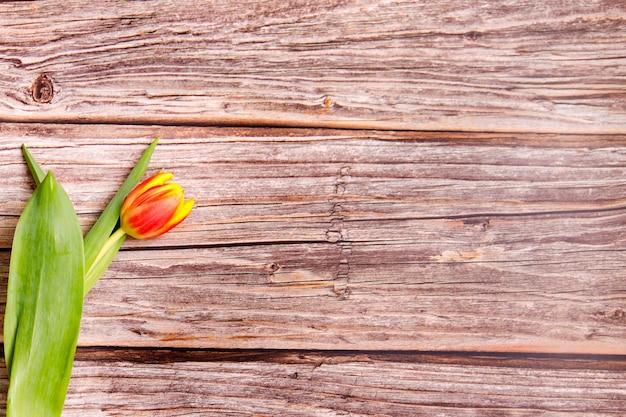 Wiosenne tulipany na podłoże drewniane
