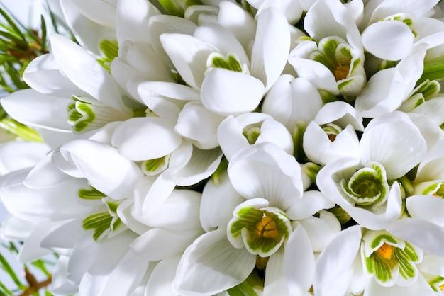 Wiosenne Wakacje Przebiśnieg Kwiaty Tło (kompozytowe Zdjęcie Makro Ze Znaczną Głębią Ostrości) Premium Zdjęcia