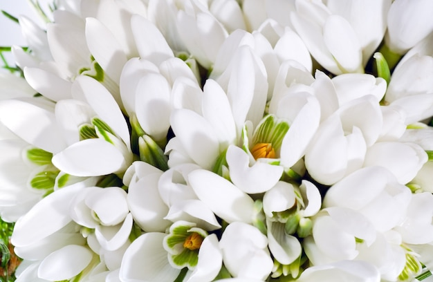 Wiosenne wakacje przebiśnieg kwiaty tło (kompozytowe zdjęcie makro ze znaczną głębią ostrości)