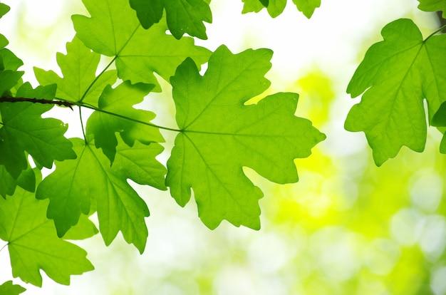 Wiosenne zielone liście tło w słoneczny dzień