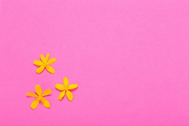 Wiosenne żółte kwiaty na różowej powierzchni papieru