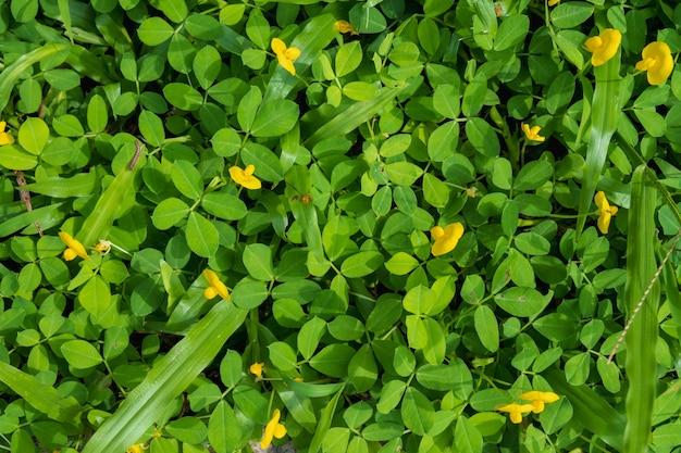 Wiosenne żółte kwiaty tło z porannym słońcem