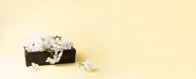 Wiosenny baner, drewniane pudełko z białymi kwiatami wiśni na żółto