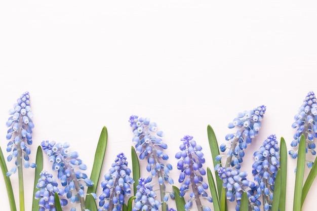 Wiosenny bukiet kwiatów muscari niebieski na białym tle