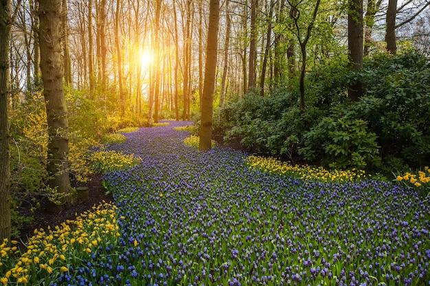 Wiosenny krajobraz z pięknymi kwiatami w drewnie