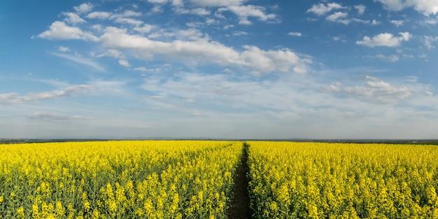 Wiosenny krajobraz z polami uprawnymi