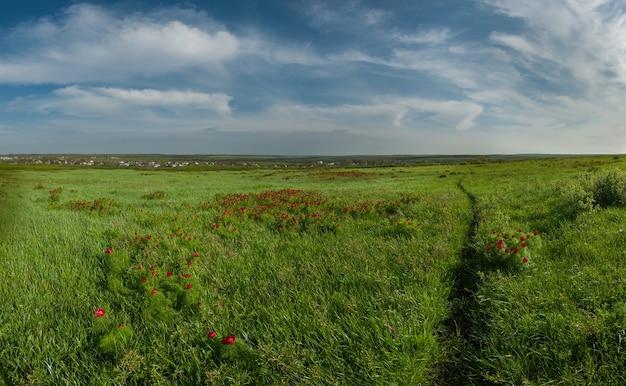 Wiosenny krajobraz ze ścieżką przez zieloną łąkę, dzikie czerwone piwonie i piękne niebo, panorama