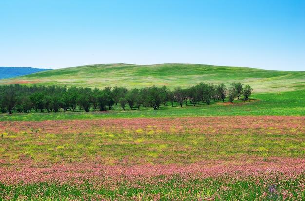 Wiosenny kwiat łąka