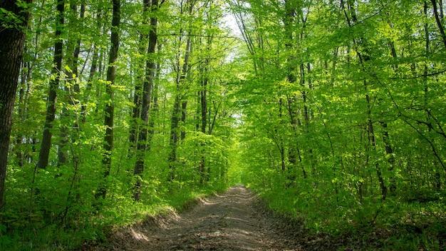 Wiosenny las liściasty z zielenią, trawą i kwitnącymi krzewami. tło