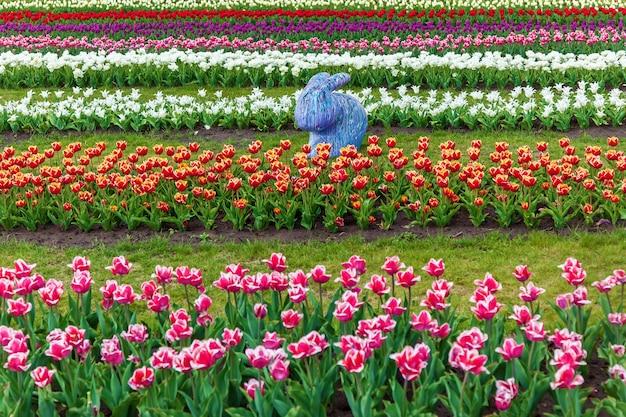 Wiosenny ogród kolorowych tulipanów na kwietniku w mieście kolorowe tulipany na kwietniku