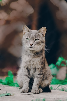 Wioska kot odpoczywa na wioska kocie na gospodarstwie rolnym. miły kot na ziemi
