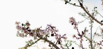 Wiosną granicy lub sztuka tło z różowy kwiat