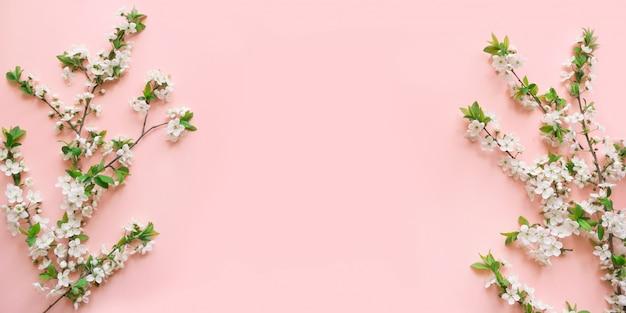 Wiosna biały kwiat oddziałów na różowo.