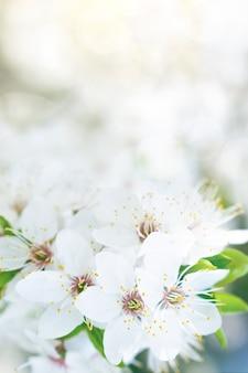 Wiosna biały kwiat