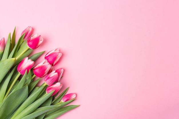 Wiosna btight róża tło z wiosennych kwiatów tulipanów. wolna przestrzeń. skopiuj miejsce. widok z góry.