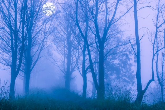 Wiosna. gęsta mgła w nocnym lesie. wielki księżyc w pełni za gałęziami drzew