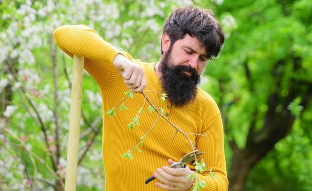 Wiosna. gospodarstwo rolne. rolnik pracujący w ogrodzie. brodaty mężczyzna z nożyczkami ogrodowymi. brodaty mężczyzna z narzędziami ogrodniczymi. praca ogrodnika.