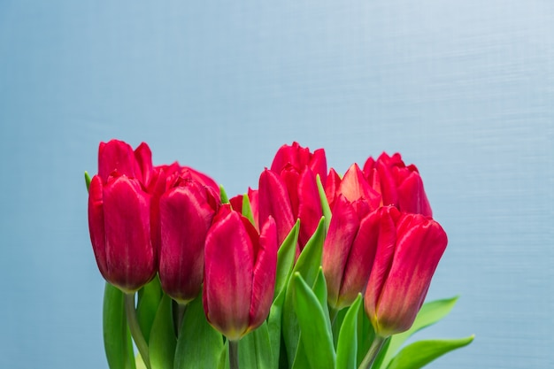 Wiosna kartkę z życzeniami. bukiet czerwonych tulipanów na niebieskim tle. koncepcja dzień kobiety. copyspace dla tekstu.