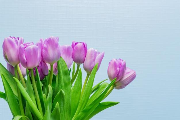 Wiosna kartkę z życzeniami. purpurowy tulipanu bukiet na błękit ścianie. koncepcja dzień kobiety. copyspace dla tekstu.