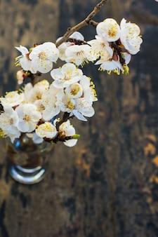 Wiosna koncepcja kwitnąca brzoskwinia