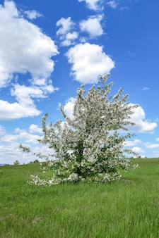 Wiosna krajobraz kwitnąca jabłoń na zielonym zboczu i błękitne niebo z chmurami