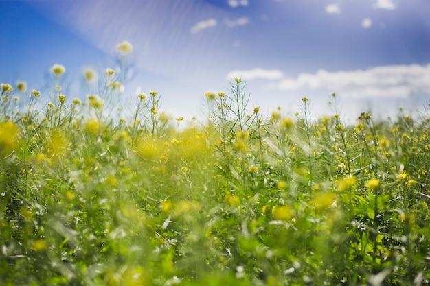 Wiosna krajobraz w słoneczny dzień