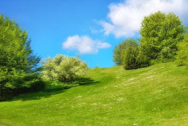 Wiosna krajobraz z świeżymi liśćmi i zieloną trawą